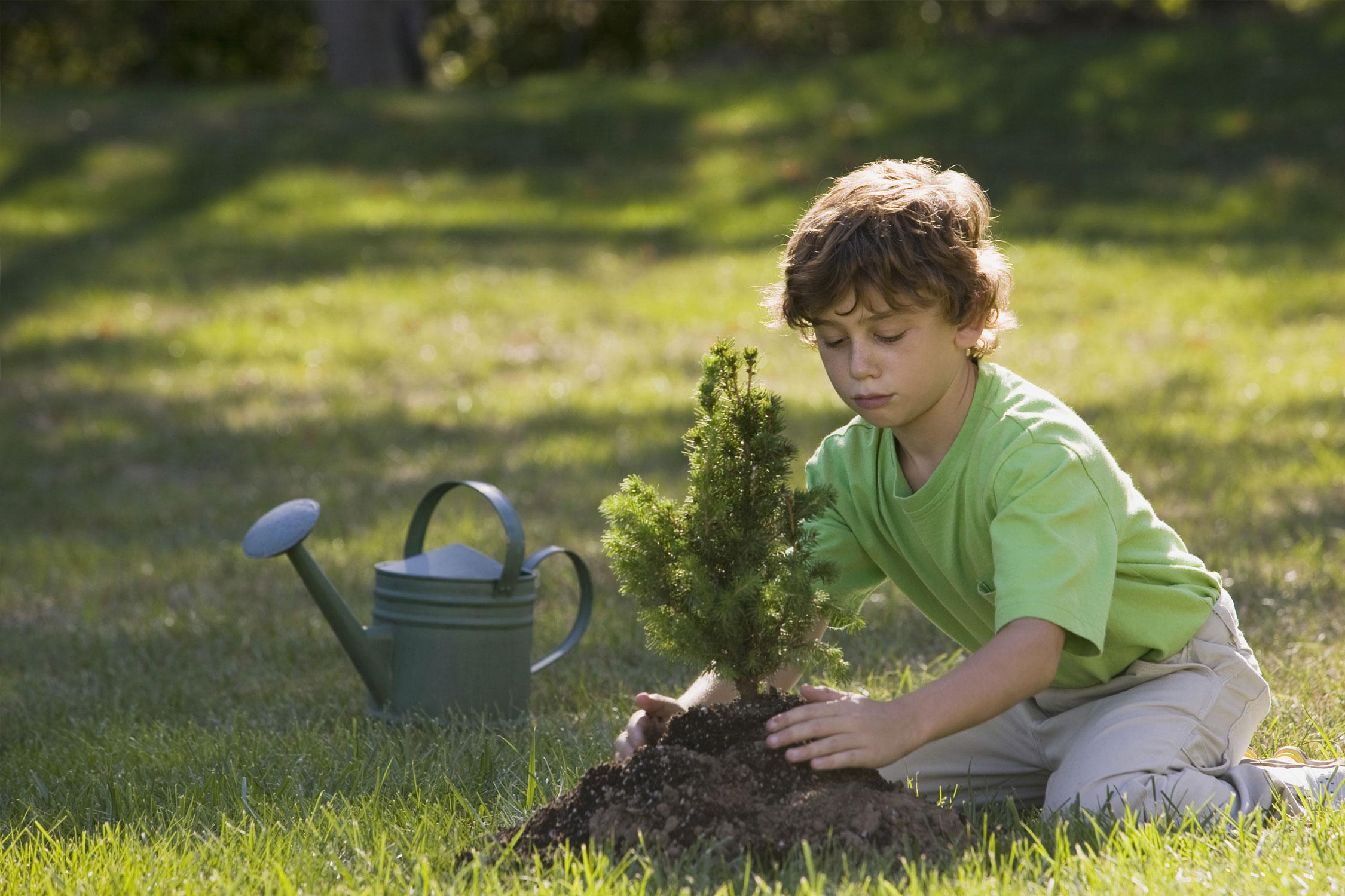 Plantar árboles mejora la calidad de vida - Negocios