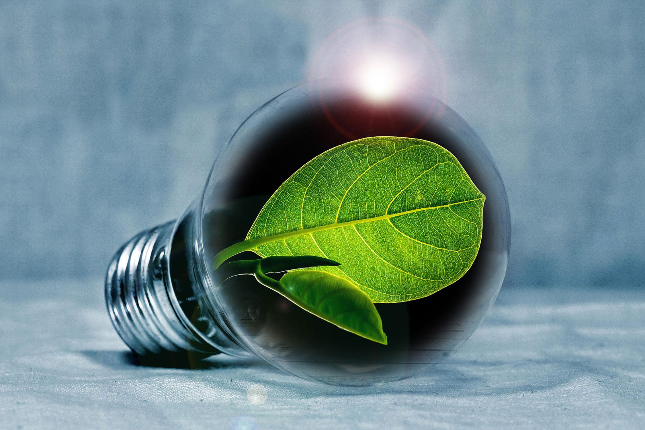Financiamiento a empresarios en proyectos ambientalistas